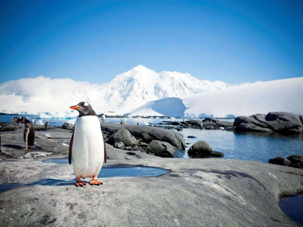 Did you know about these beautiful Antarctica beaches?