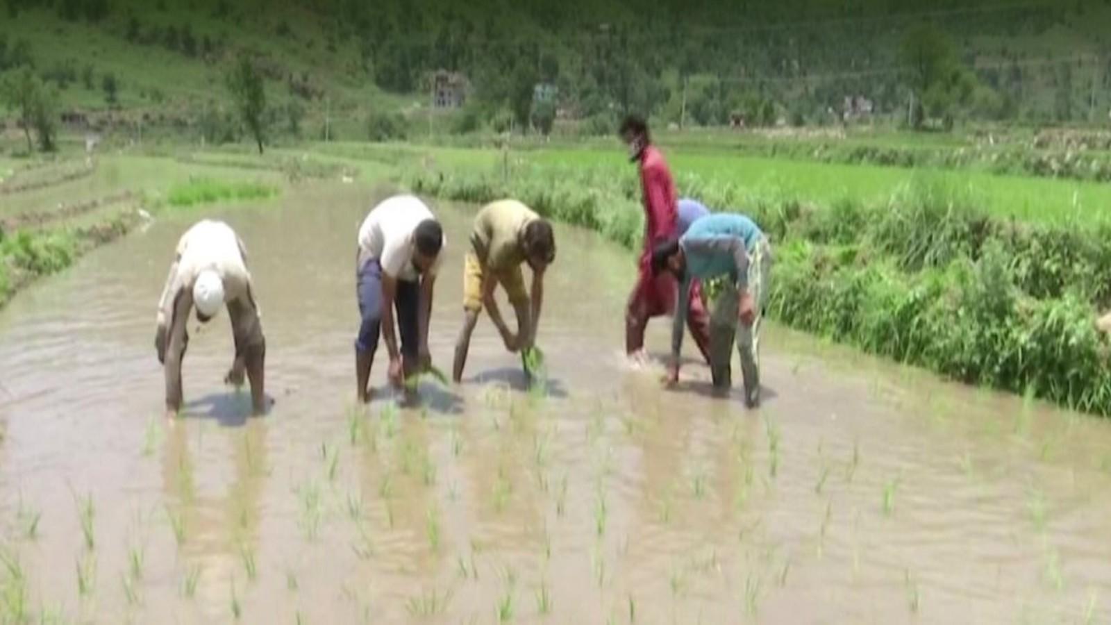 rajouri-farmers-rejoice-after-getting-water-supply-to-farm-fields