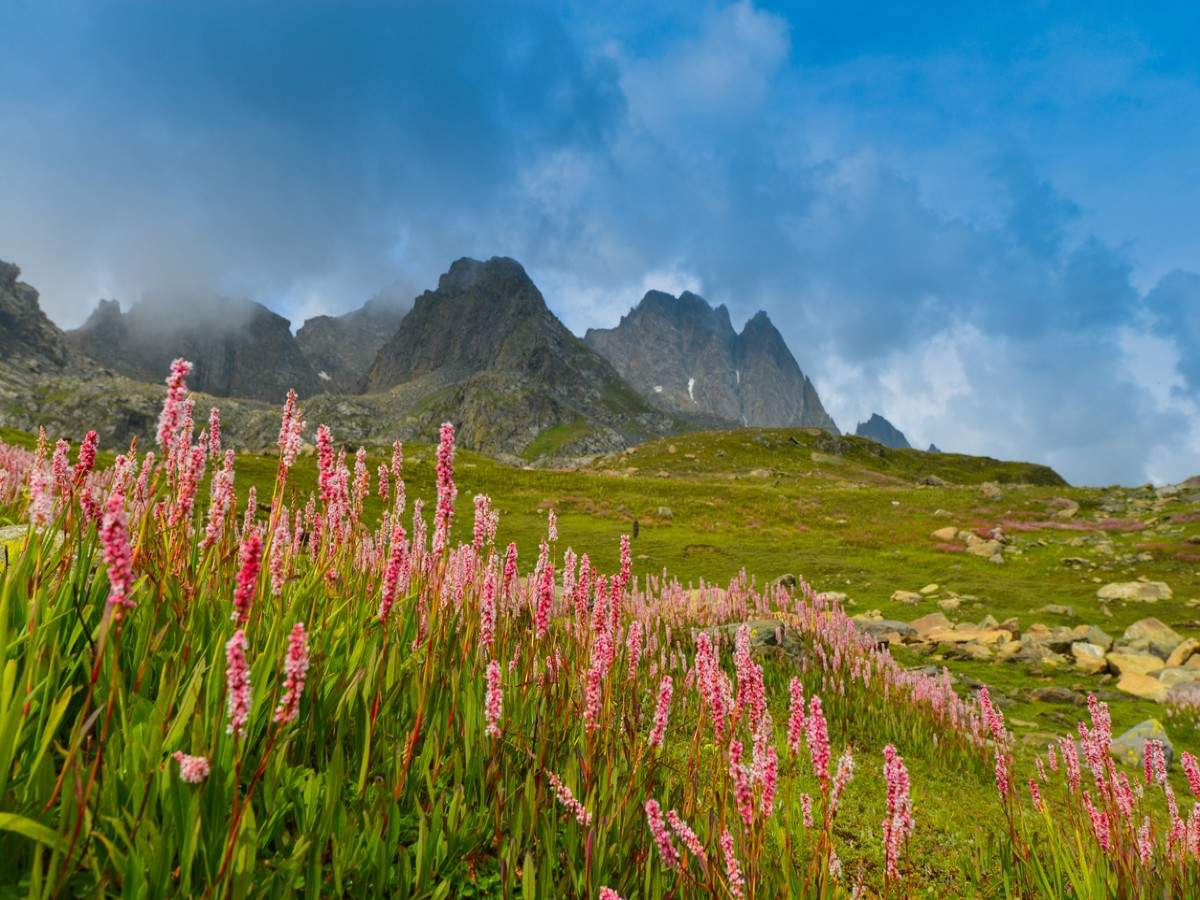 Uttarakhand's stunning Valley of Flowers opens for tourists