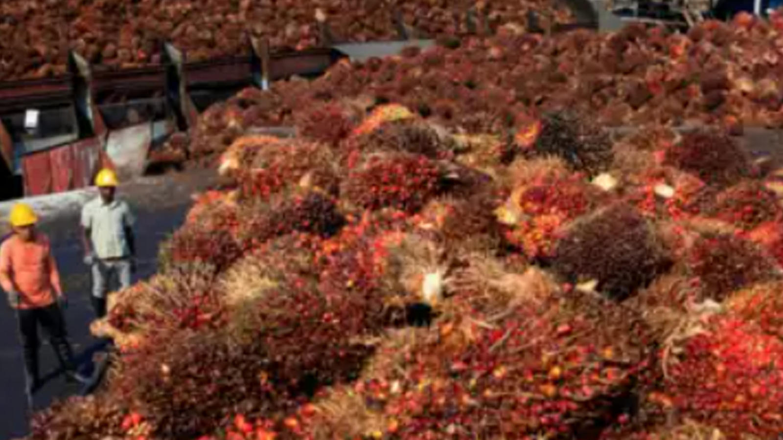 palm-oil-prices-see-6-jump-even-after-import-duty-cut