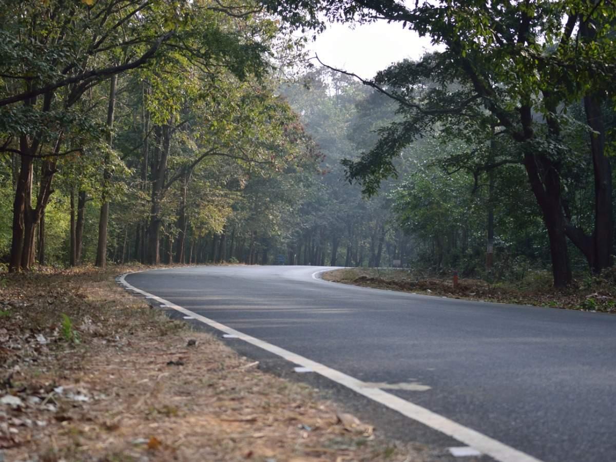 Karnataka's Kali Tiger Reserve opens a canopy walk