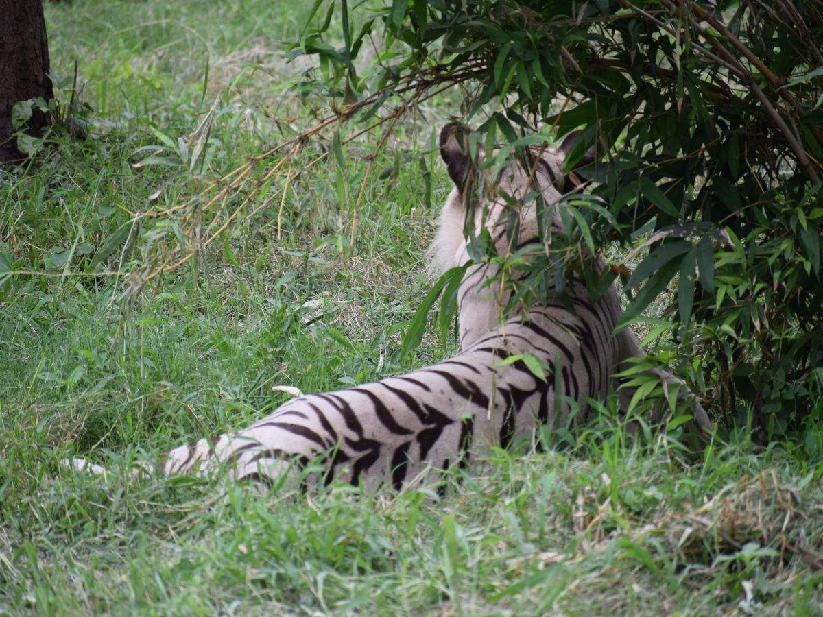 Delhi Zoo to reopen for visitors from August 1 with COVID protocols in place