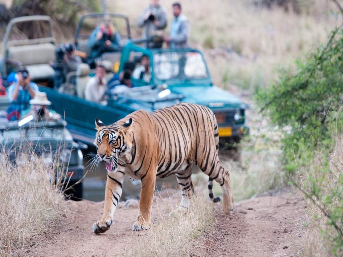 Offbeat tiger sanctuaries to visit in India
