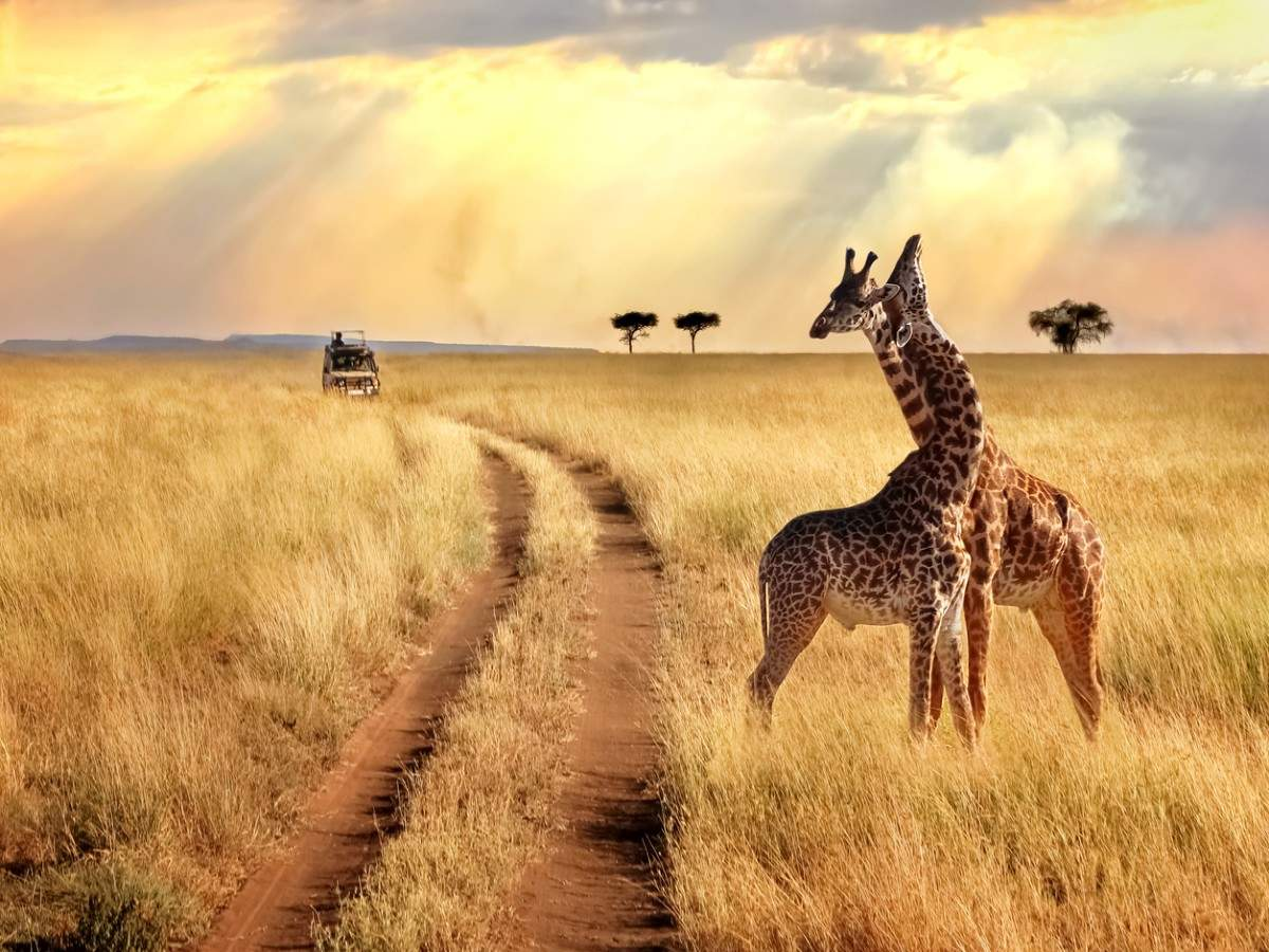 On a Kenyan safari: Best lodges to stay in the wilderness