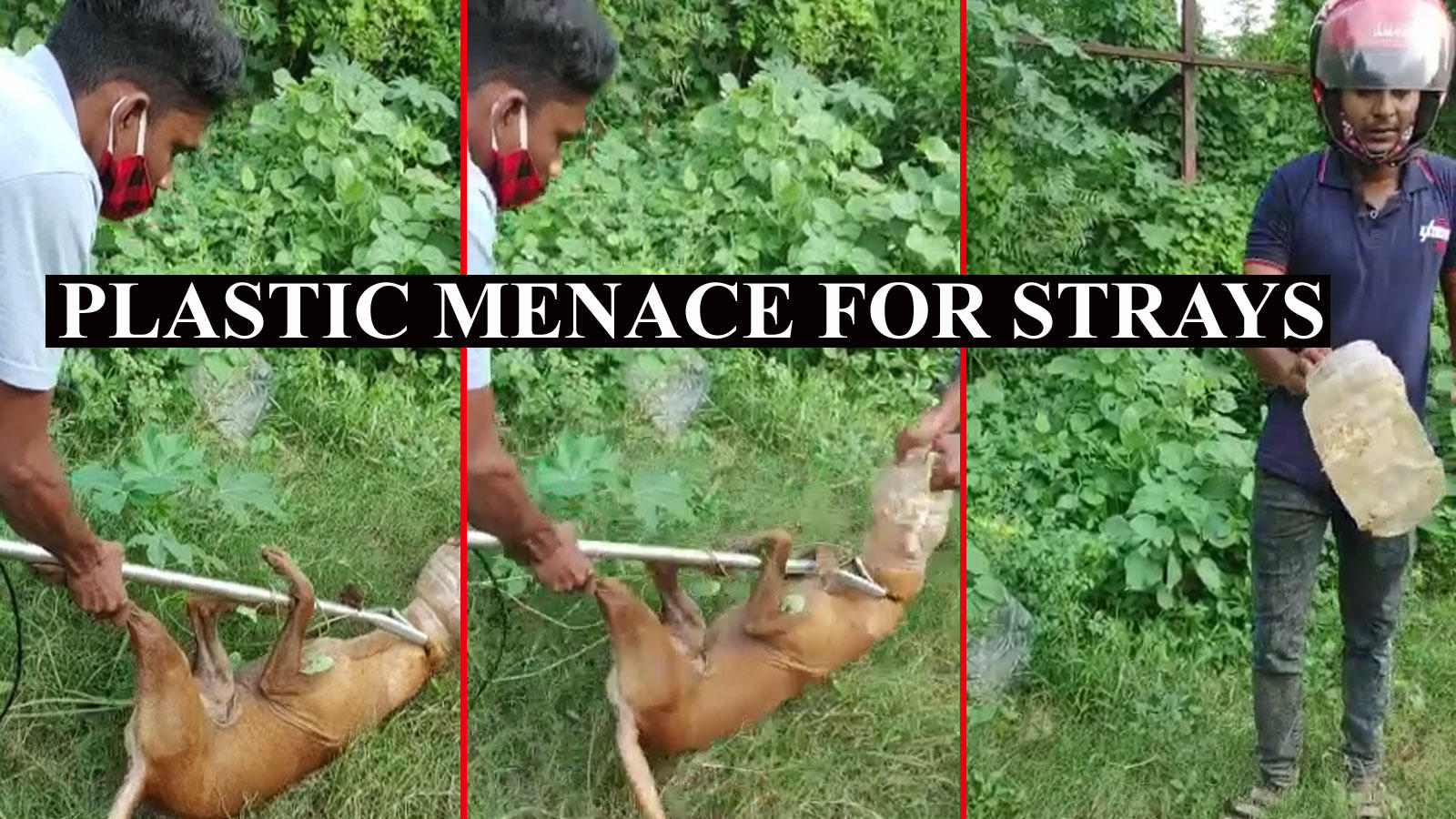 stray-dog-gets-its-head-stuck-in-a-plastic-jar-rescued-by-civic-workers