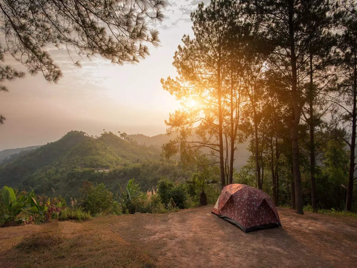 India's best jungle camping sites that you must visit once