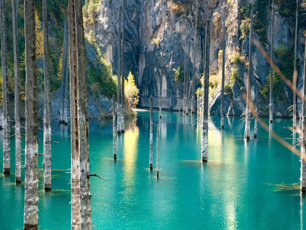 Unbelievable underwater forests from across the world!