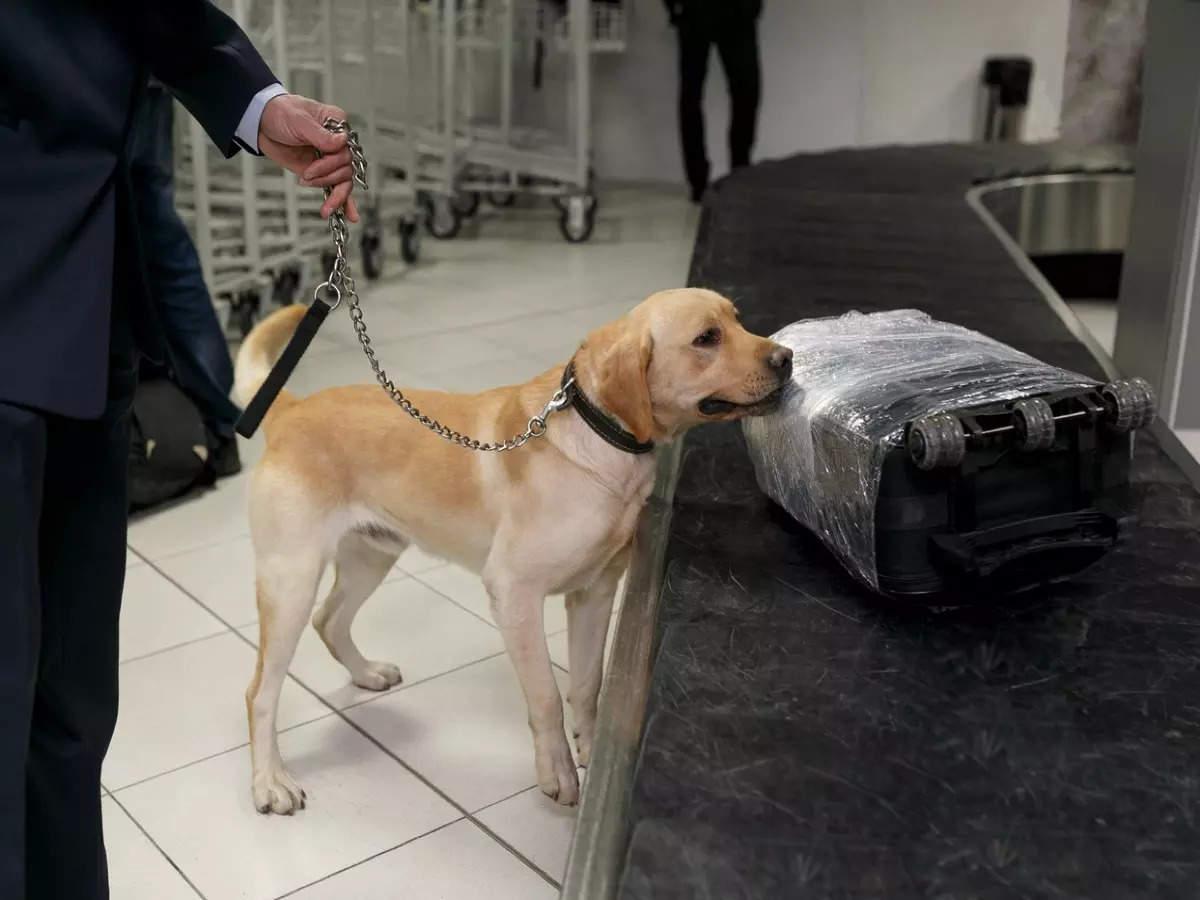 Miami International Airport to use sniffing dogs to detect Coronavirus
