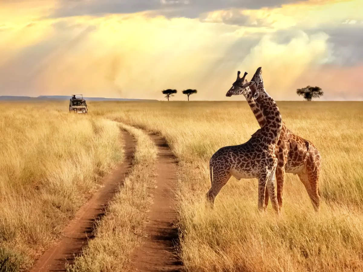 Kenya is now open for Indian travellers