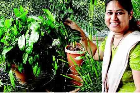 Create your own organic kitchen garden times of india for Creating a kitchen garden
