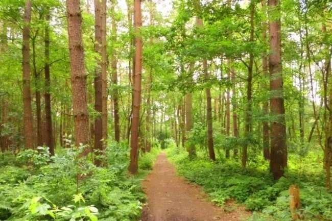Jahanpanah Forest