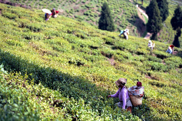 Best Hill station in India | Top Hill station of india
