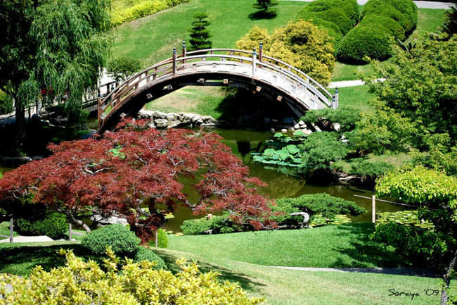 The Huntington Botanical Gardens in Los Angeles | Times of India Travel