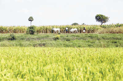 Good news for agricultural land buyers