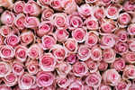 10 flowers that are edible just like any food