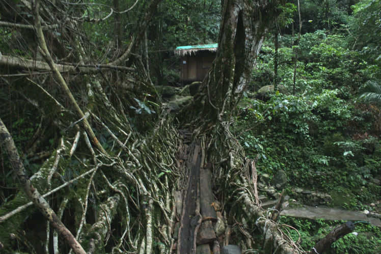 Discovering the undiscovered: a complete guide to visiting the living root bridges in Meghalaya