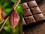 Chocolates will be EXTINCT in 30 years!