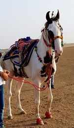 Owner of this rare breed horse has refused offers from Salman Khan, Badals of Punjab