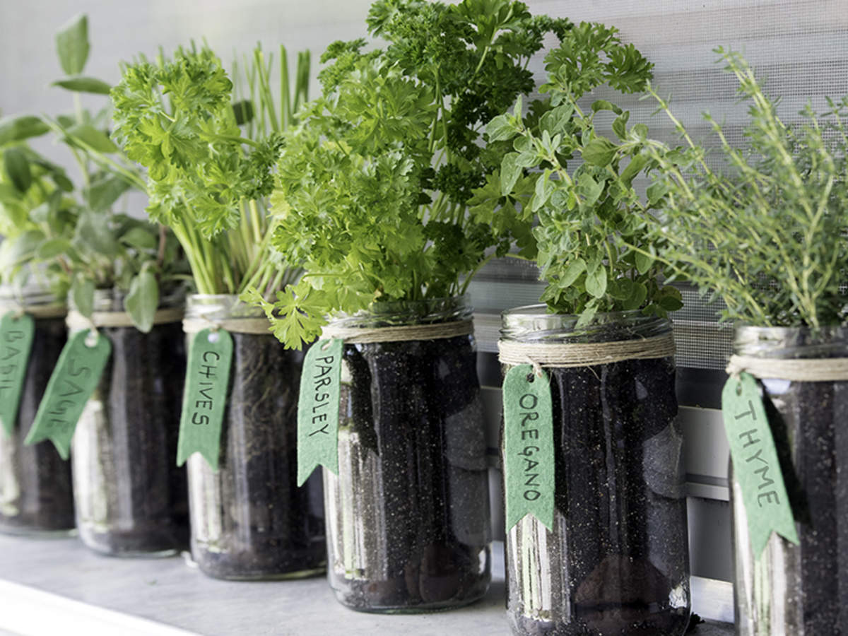 Herbs To Grow In Your Kitchen Garden