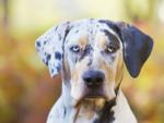 Surprisingly rare dog breeds
