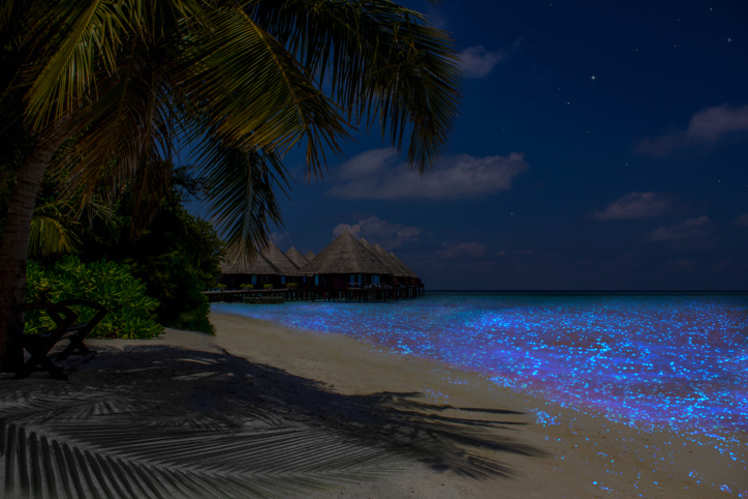 The Gorgeous Glowing Beach Of Maldives