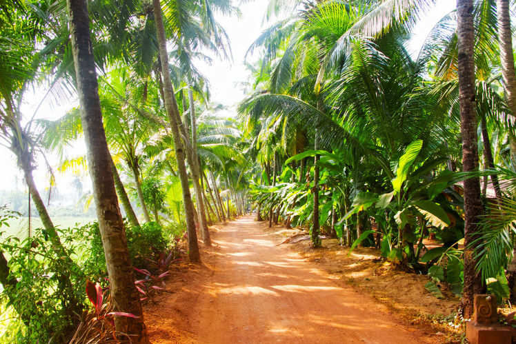 kerala is back on track after floods open to tourists with more