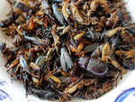 Health benefits of eating insects