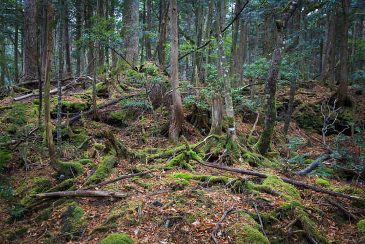 Suicide Forest of Japan | Times of India Travel