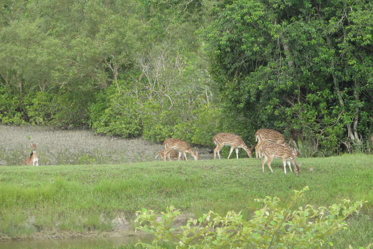 5 popular biosphere reserves in India that deserve a visit