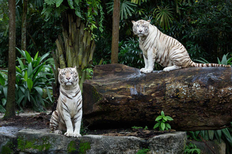Best zoos in India and why you should visit them