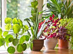 ​The best air cleaning plants
