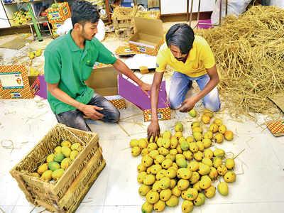 mango: Pay more for mangoes this season