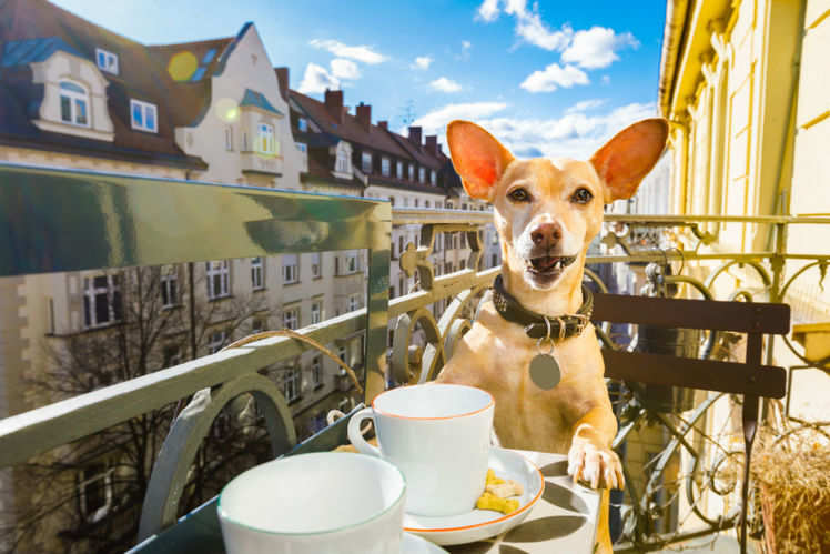 Pet-friendly cafes in India to go on a date with your furry