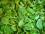 What is Spinach?