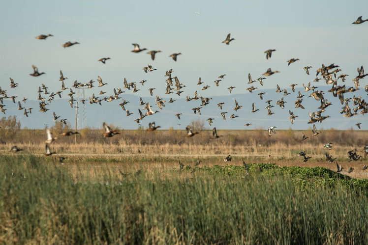 All about Mangalajodi in Odisha, a birdwatcher's paradise