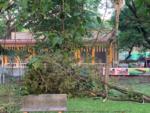 Cubbon Park devastation