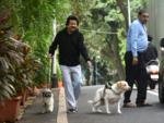 Pankaj Uddhas takes his canine friends for a morning walk