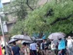 Tree collapses in Mulund