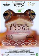 The Secret Life Of Frogs