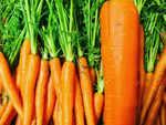 Carrot modifications