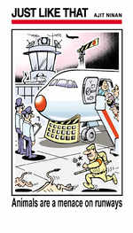 Animals are a menace on runways