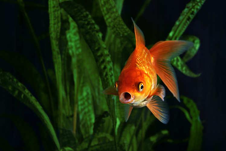 Mumbai might very soon boast of a Bangkok-style multi-level aquarium