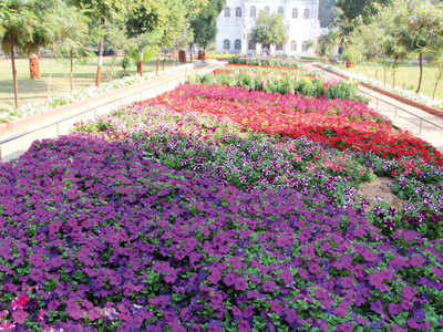 The Vibrant Petunias