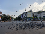 Pigeons reclaim the city's chowks
