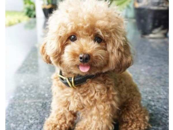 Adorable Puppies That Look Like Real