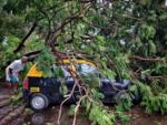 Wadala taxi damaged after tree fall