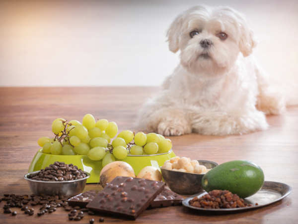 Dog sitting around foods that dogs shouldn't have.