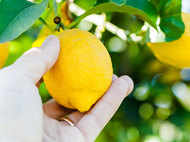 The right way to store lemons to keep them fresh for longer