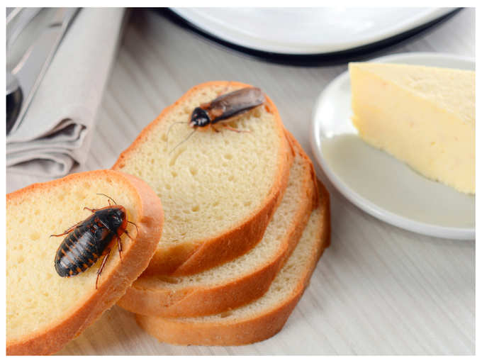 How To Control Cockroaches In The Kitchen 7 Remedies That Prevent Cockroaches And Bugs In Kitchen