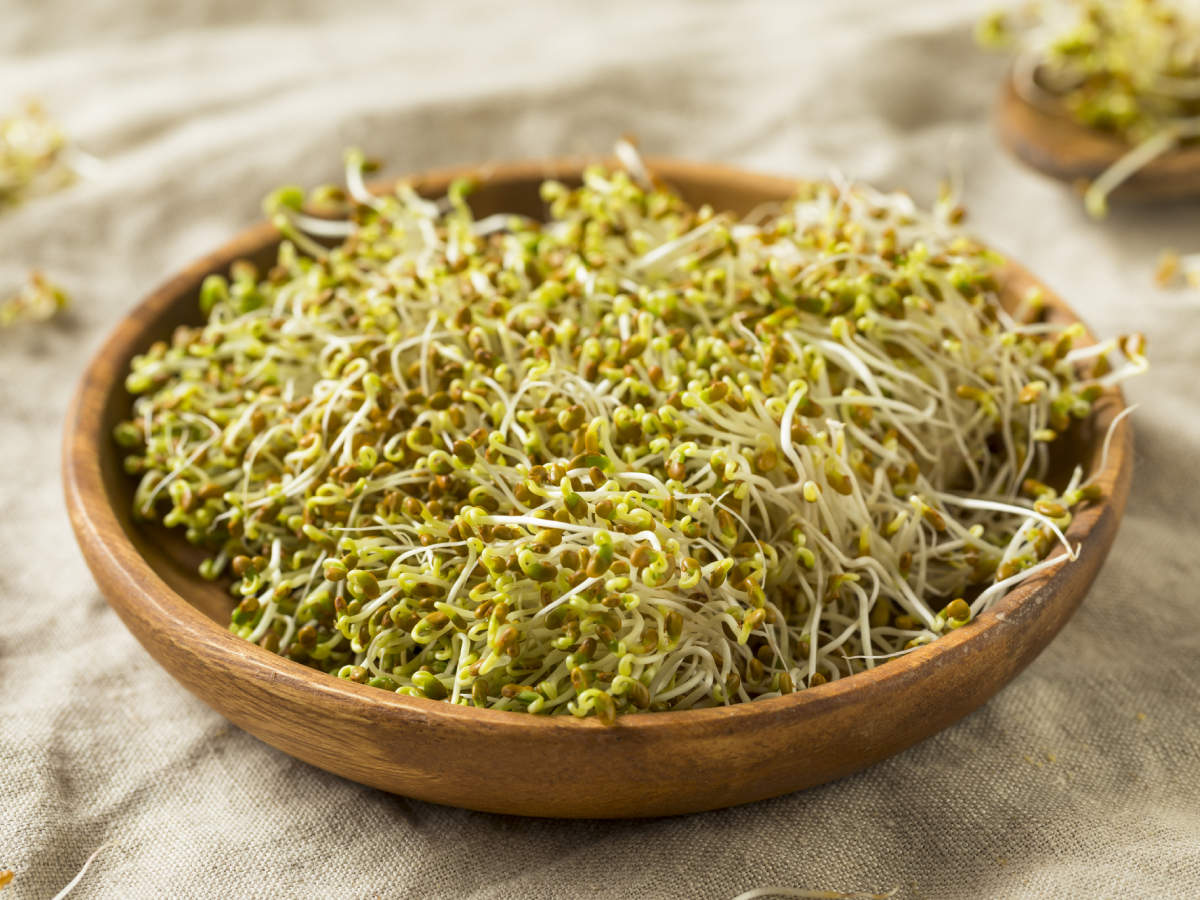 Benefits of Alfalfa sprouts and how to grow them at home | The Times of India
